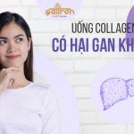 Uống collagen có hại gan không? Giải đáp chi tiết nhất từ Bác sĩ Da liễu