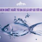 Collagen chiết xuất từ da cá nên sử dụng không? Loại nào tốt nhất?