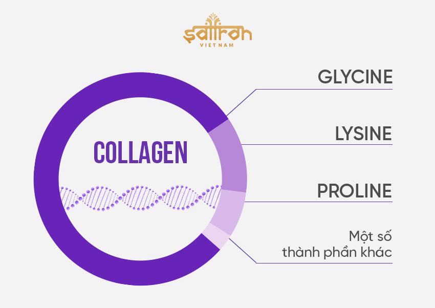 Collagen chiết xuất từ thực vật là gì?