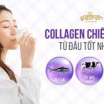 Collagen chiết xuất từ đâu tốt nhất, đem lại hiệu quả cao nhất?